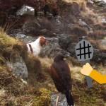 Brittanys-Dog-Breeder-Steve-Wright-Falconer-1200x639